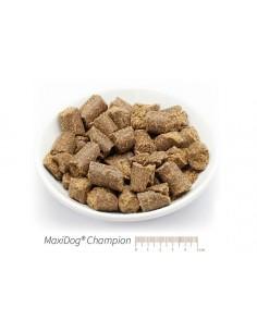 MaxiDog Champion