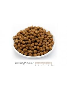 MaxiDog Junior